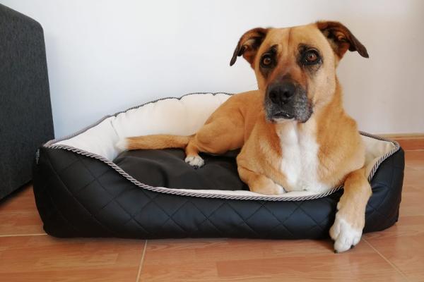 Cama para perro Royal