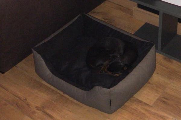 Cama perro talla M gris